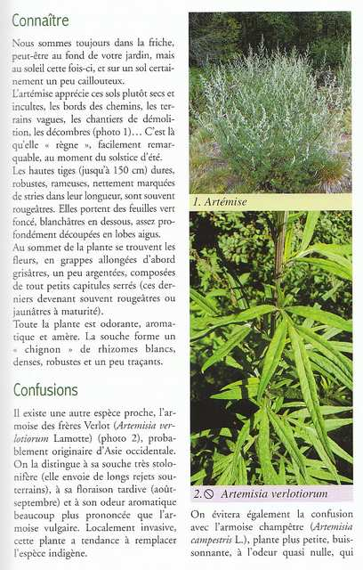 Les Plantes sauvages Thevenin Thierry